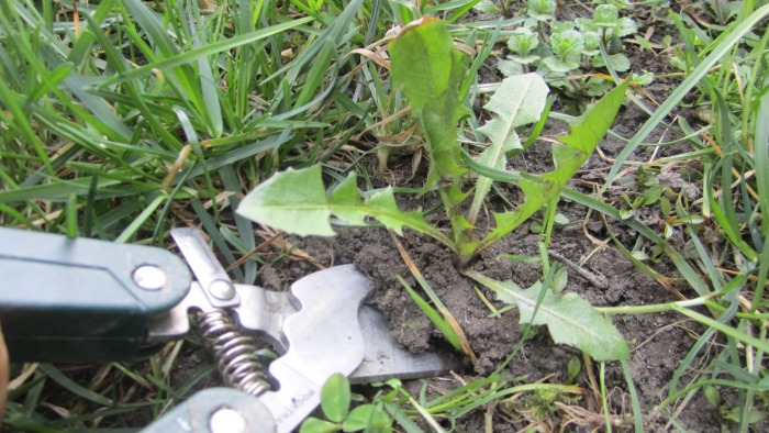 Garden-Weed-Identification